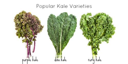 Giá trị của rau cải xoăn cho sức khỏe và làm đẹp không thể thiếu