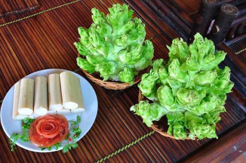 Kỹ thuật trồng rau cải mầm đá cho năng xuất cao
