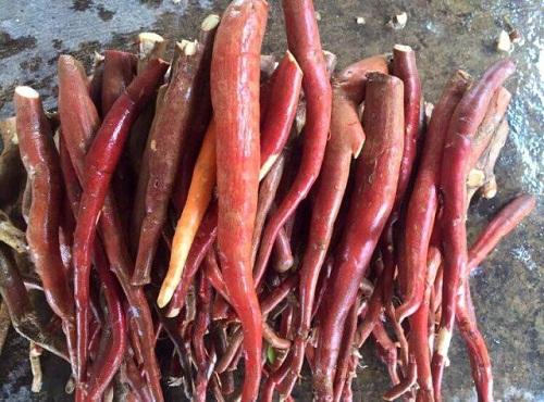 Bán sâm cau đỏ tươi củ to loại 1 ở đâu tại Hà Nội