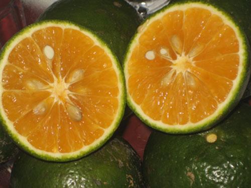 cam sành có tác dụng gì cho sức khỏe