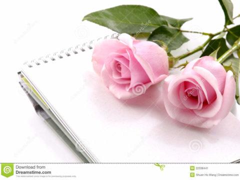 Vì sao hoa hồng lại là nữ hoàng của mọi loài hoa