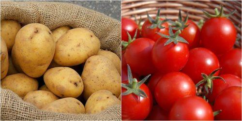 Thực hư cà chua và khoai tây kỵ nhau