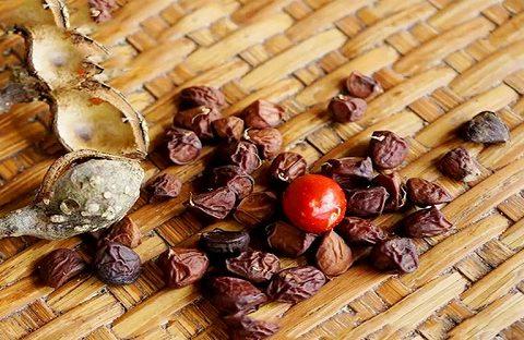 Hạt dổi rừng giá bao nhiêu tiền 1kg – Mua hạt dổi rừng ở đâu tại Hà Nội