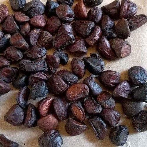mua hạt dổi rừng ở đâu tại hà nội