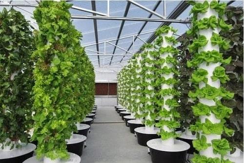 mô hình trồng rau sạch VietGAP khí canh