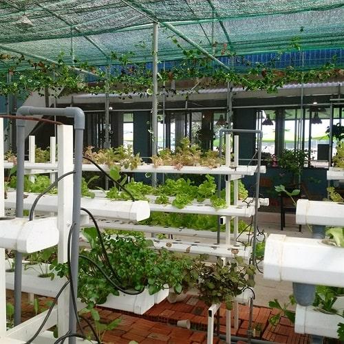Mô hình kết hợp quán cà phê với trồng rau thủy canh