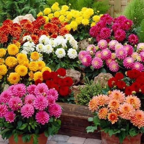 chiem nghiem  y nghia hoa thuoc duoc